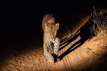 Nacht Leopard von Martin Schuit