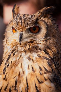 Owl.(uil) van Brian Morgan
