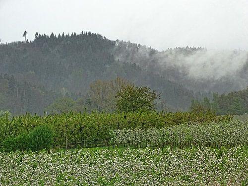Nebel van Edgar Schermaul