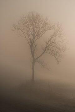 Boom alone in de mist van Moetwil en van Dijk - Fotografie