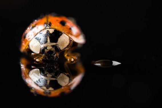 Lieveheersbeestje met zelfreflectie van Gerry van Roosmalen