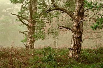 Herfst naaldbos in de mist van Peter Bolman