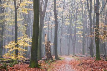 Herfst regen in het Speulderbos van Cor de Hamer