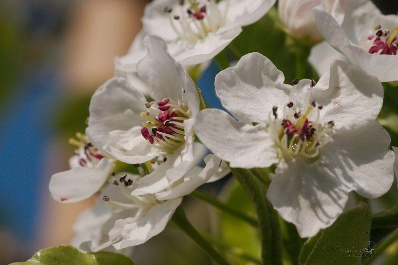 Frühlingsblüte von Erik Reijnders