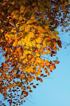 Herfstbladeren van Matthijs Damen