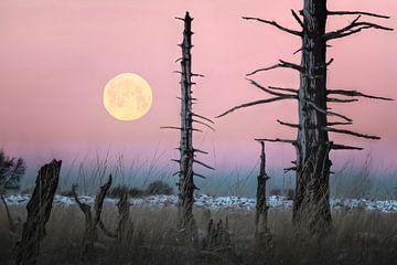 Roze maan van Peter Poppe