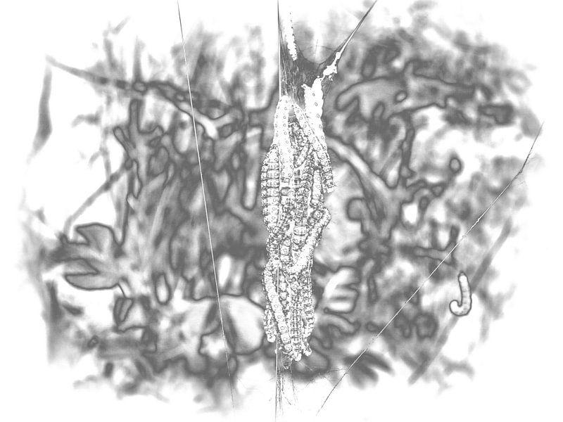 Caterpillar 3 van Jon Houkes
