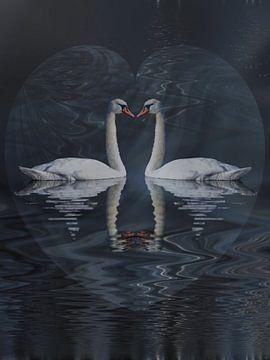 Liefde van de zwaan van