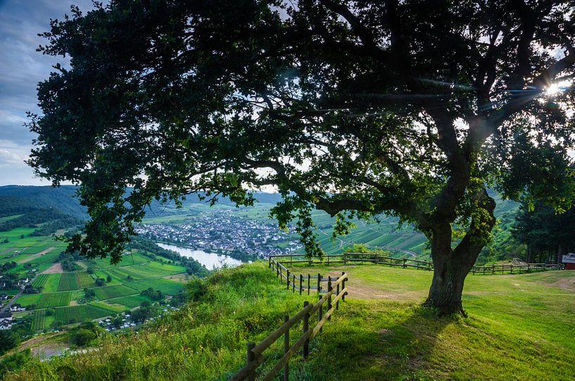 The lonely tree of Mont Royal - Moezel van Ricardo Bouman | Fotografie