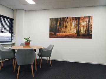 Kundenfoto: Sonnenlicht im Herbst Wald von Fotografie Egmond
