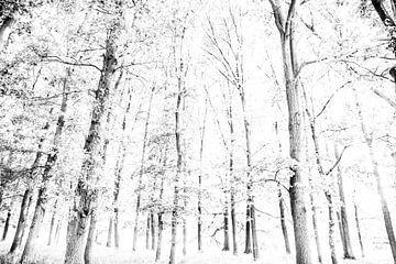 Bäume im Wald | Schwarz-Weiß-Fotografie | Malerisch von Wendy Boon
