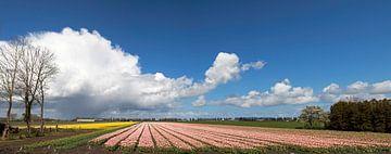 Hollandse tulpenvelden  van Maurice de vries