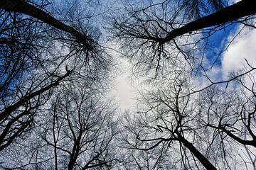 the trees that grew so high van Joachim G. Pinkawa