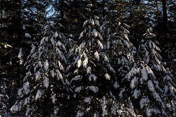 Schöne verschneite Bäume mit Sonnenlicht von Tamara Geluk