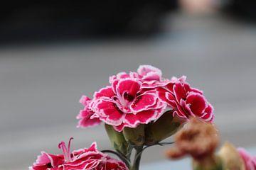 spanische Blume von emma de winter