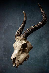 Dieren schedel Art van Aisa Joosten