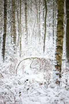 Birkenwald in einer Winterlandschaft | Fine Art Photo Print von Karijn Seldam