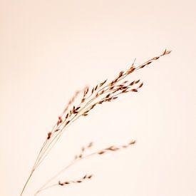 Nature morte en grain sur un fond rose paisible sur Annieke Slob