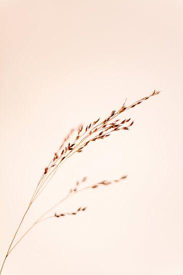 Stilleven graan tegen rustig roze achtergrond