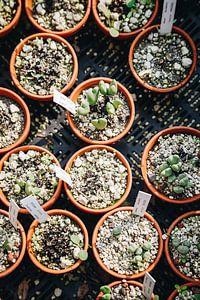 Stecklinge verschiedener sukkulenter Pflanzen im Botanischen Garten in Leiden | Fine Art Urbanjungle von Evelien Lodewijks