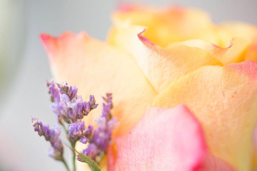 Pastel Roos van Kimberly van Aalten