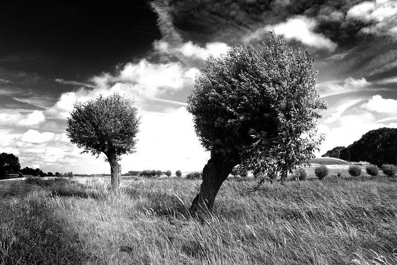 Bäume, niederländische Landschaft (schwarz-weiß) von Rob Blok