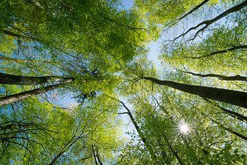 Lente in het bos van Martin Wasilewski
