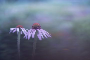 fleur sur Francis Dost