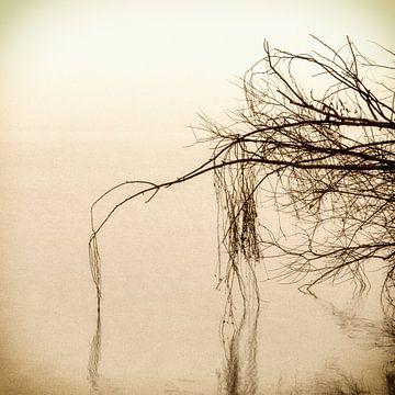 Flow van Carla Vermeend