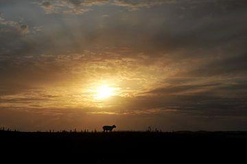 Schaap bij zonsondergang van Annick Cornu