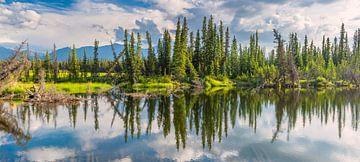 Scheve bomen bij het meer van Denis Feiner