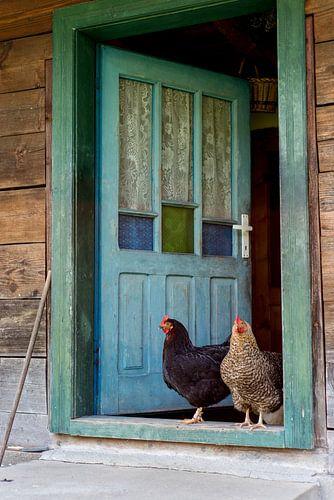 Zwei Hühner von Sander Strijdhorst