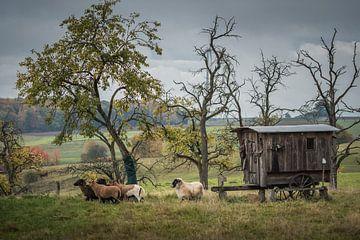 Idylle am alten Schäferwagen von Jürgen Schmittdiel Photography