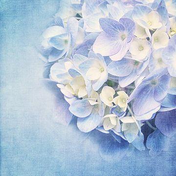 BLUE HYDRANGEA von INA FineArt
