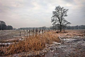 Winter, Nederland van Peter Bolman