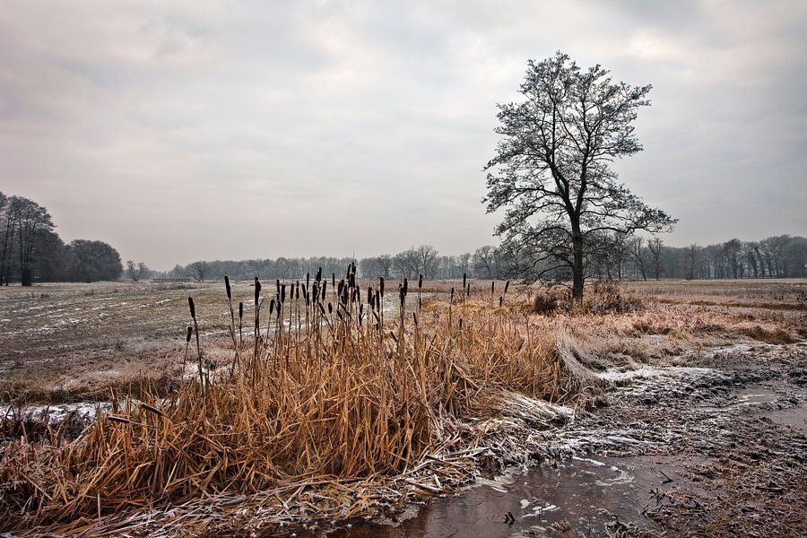 Winter, Nederland