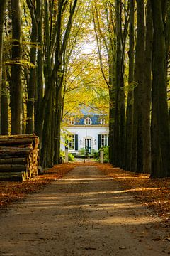 Waldweg von Arjen Uijttenboogaart