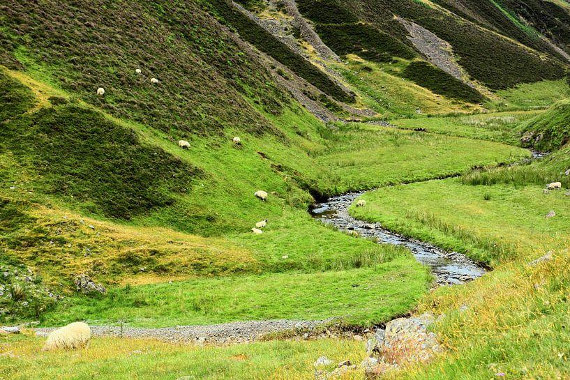 Scenery in the Moffat Water Valley van Gisela Scheffbuch