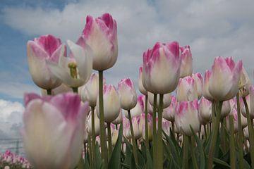 Tulpen von Fred Knip