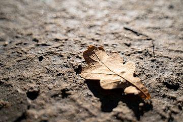 Tropfen auf einem Eichenblatt | Herbst von Noraly Sprenkels