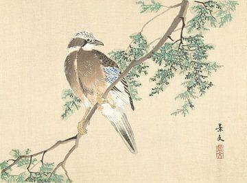 Eichelhäher auf einem Ast von Matsumura Keibun - 1892