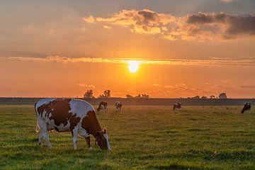 Zonsondergang met koeien / Sunset with cows van