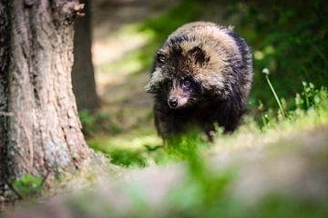 Wandeling door het bos van Tierfotografie.Harz