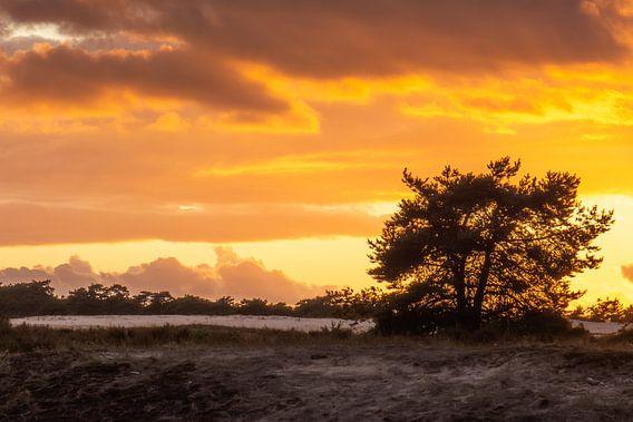 ciel orange sur le veluwe