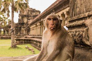 De grappige aap van