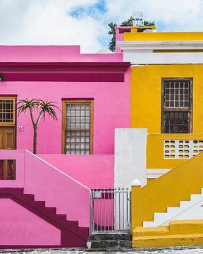 Kapstadt, Ziegenaffe von Thomas Bartelds