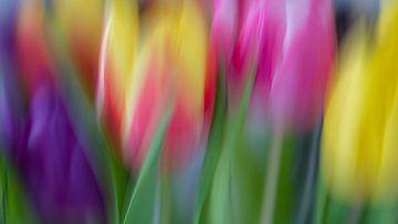 Tulips 3 von Rob Jansen