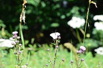 Phantastische Natur mit Schmetterling von Susanne Seidel