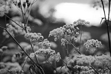 Bloemen in Zwart-Wit von Lonneke Prins