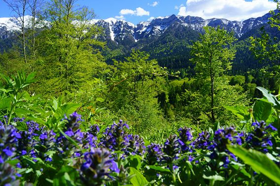 Bergen en bloemen in de Dolomieten